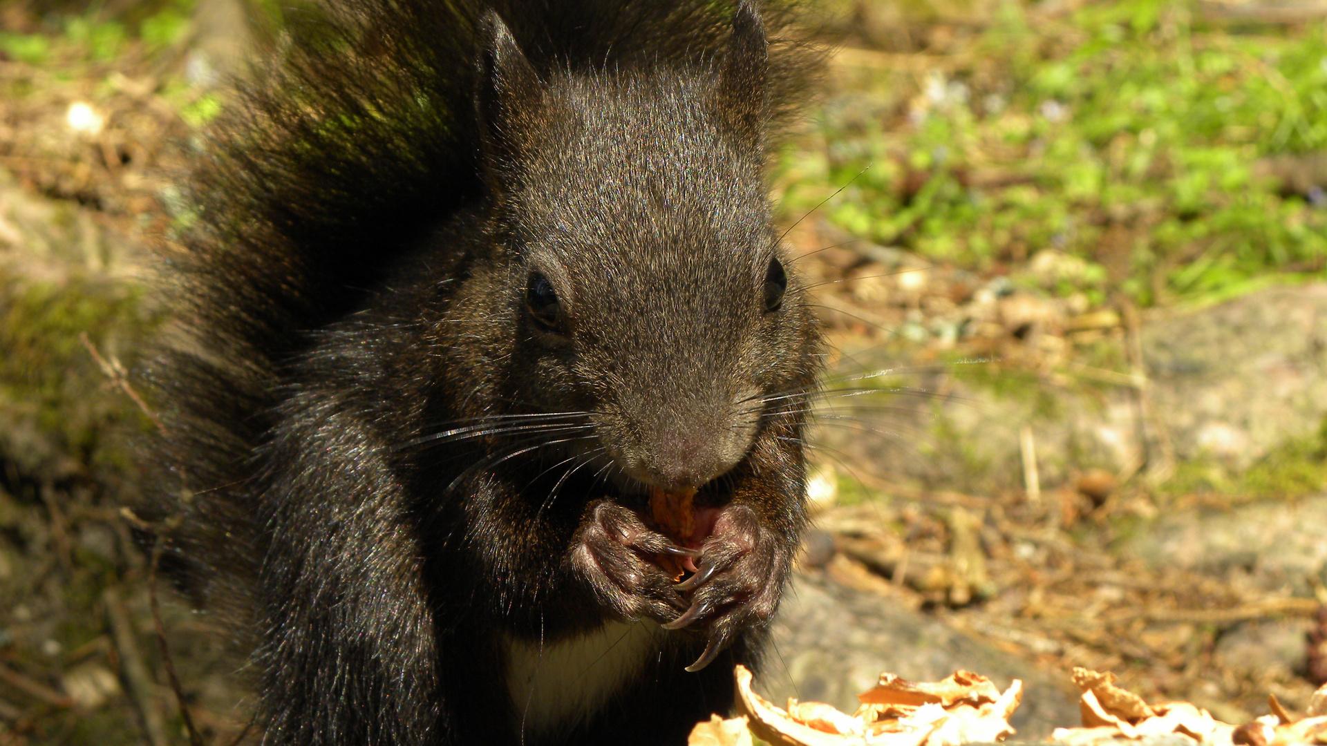 Eichhörnchen ganz nah