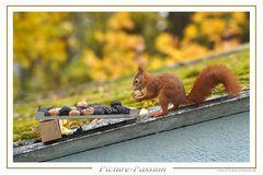 """Eichhörnchen: """"Gefunden!"""""""