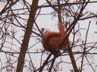 Eichhörnchen hat Futter gefunden