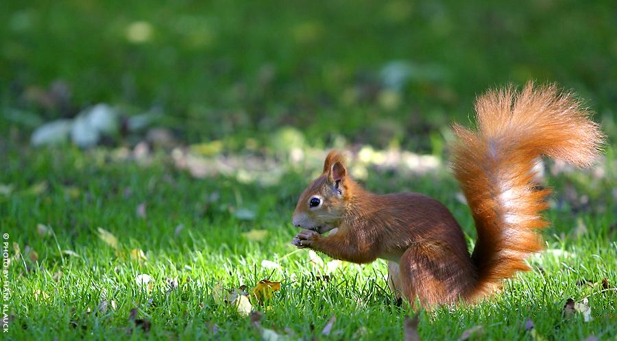 Eichhörnchen ... II