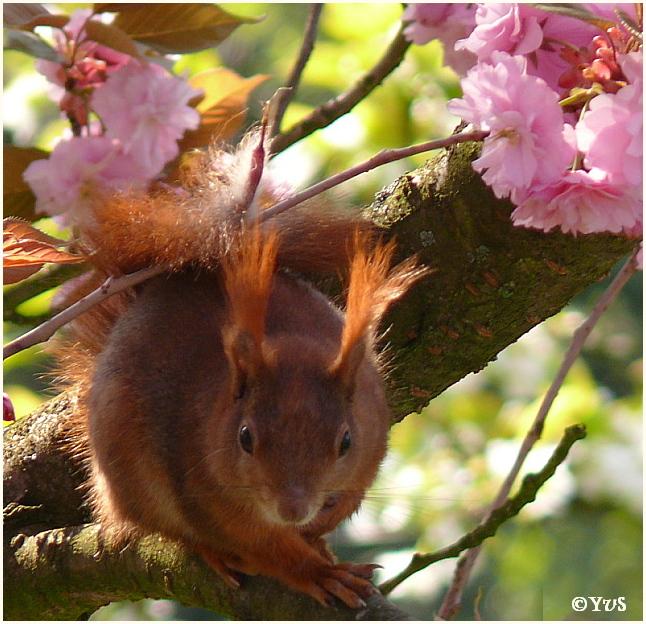 Eichhörnchen im Blütemmeer