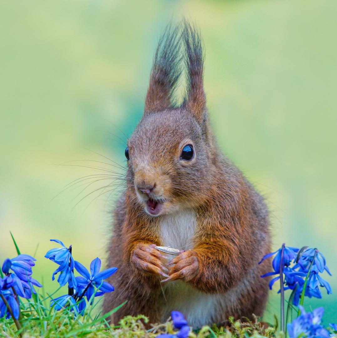 eichhörnchen im frühling foto & bild   tiere, wildlife