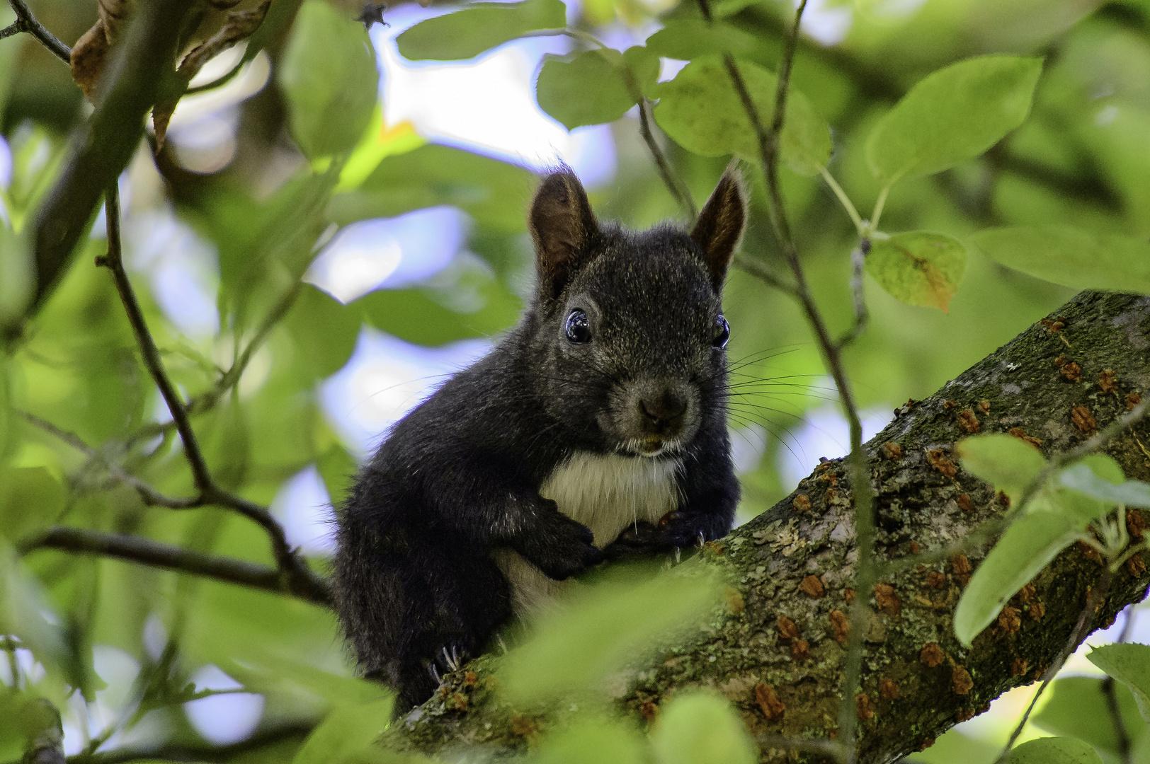 Eichhörnchen Im Garten : eichh rnchen im garten foto bild tiere wildlife ~ Watch28wear.com Haus und Dekorationen