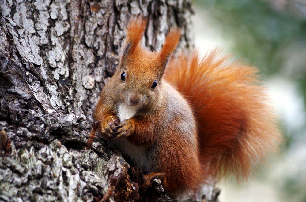 eichhörnchen im kleistpark foto  bild  tierportrait