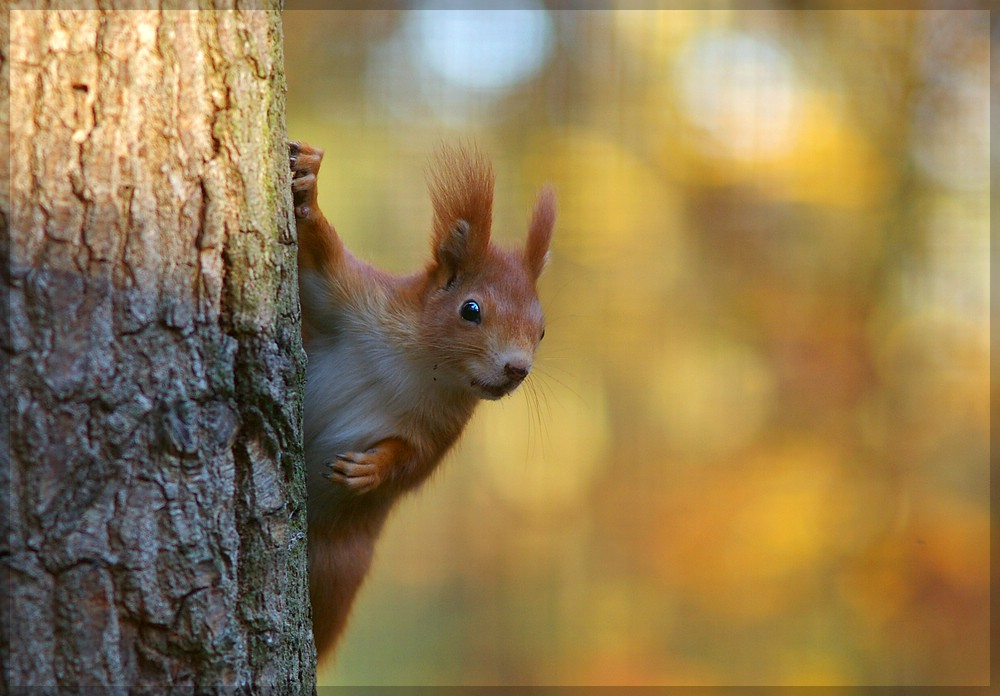 Eichhörnchen im NUP Güstrow