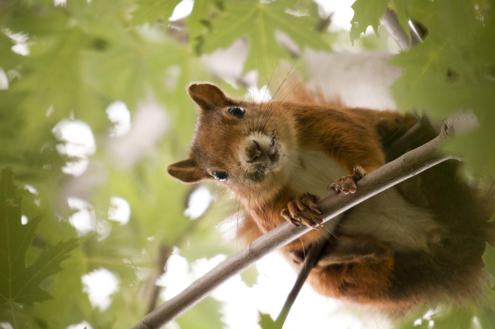 Eichhörnchen ... in Farbe