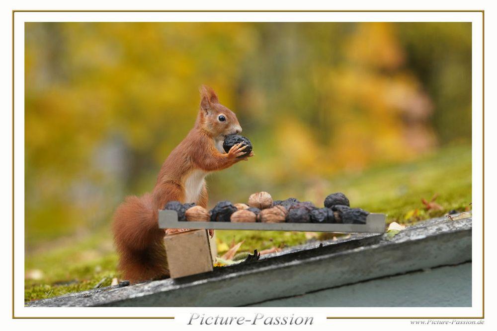 """Eichhörnchen """"Mampf"""""""