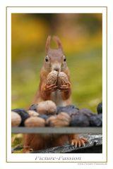 """Eichhörnchen: """"Meine Nuss"""" !"""