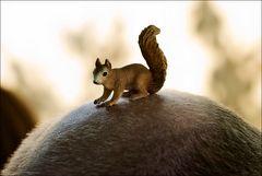 Eichhörnchen - mittig - auf ausgefressenem untergrund...