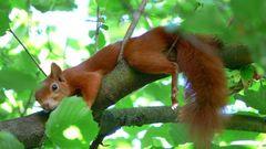 Eichhörnchen nach der Essensschlacht