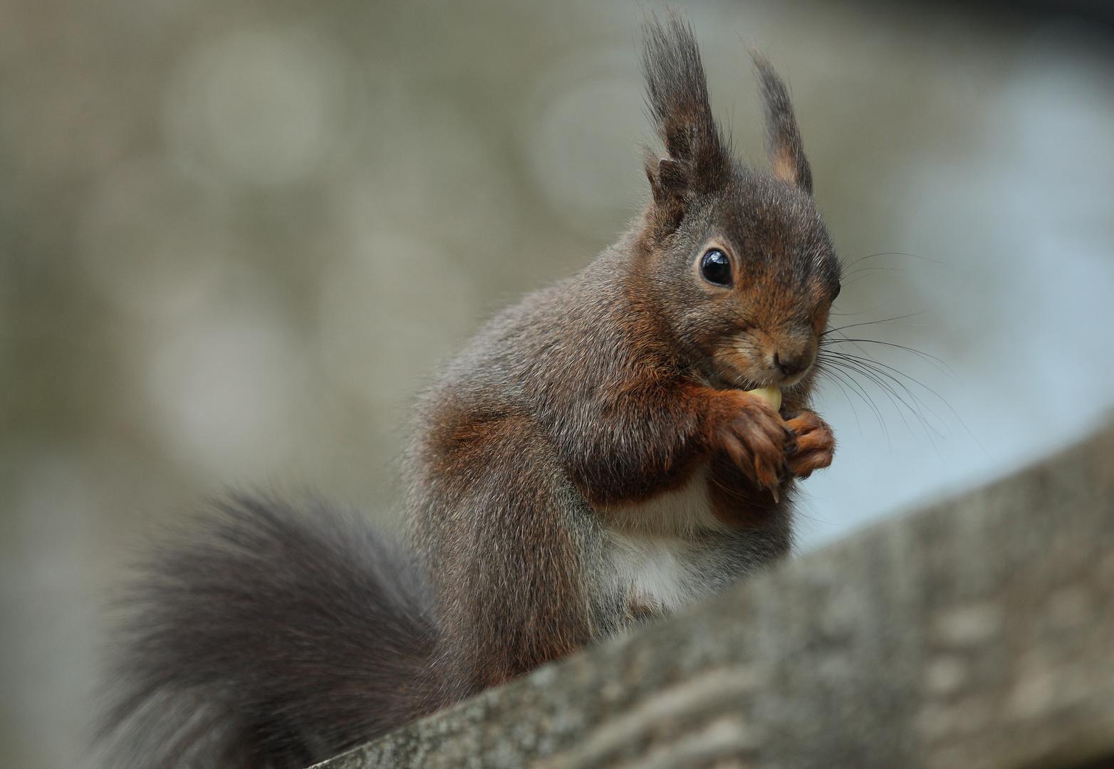 Eichhörnchen Ostern 2012
