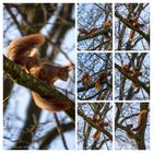 Eichhörnchen-Report