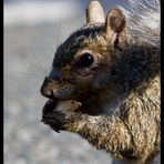 Eichhörnchen. Tja..., nicht mehr und nicht weniger...