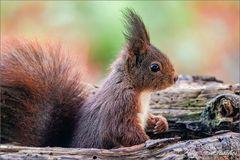 Eichhörnchen tut ganz unschuldig?