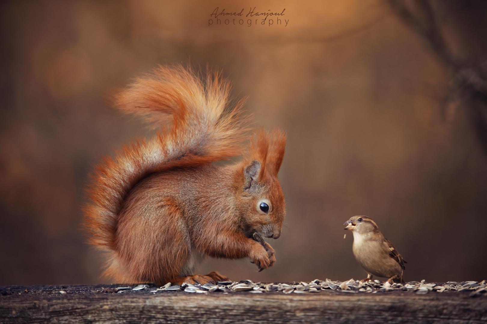 Eichhörnchen und Vogel