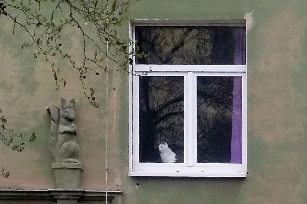 Eichhörnchen vs. Hauskatze