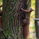 Eichhörnchen x2