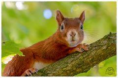 Eichhörnchen_02