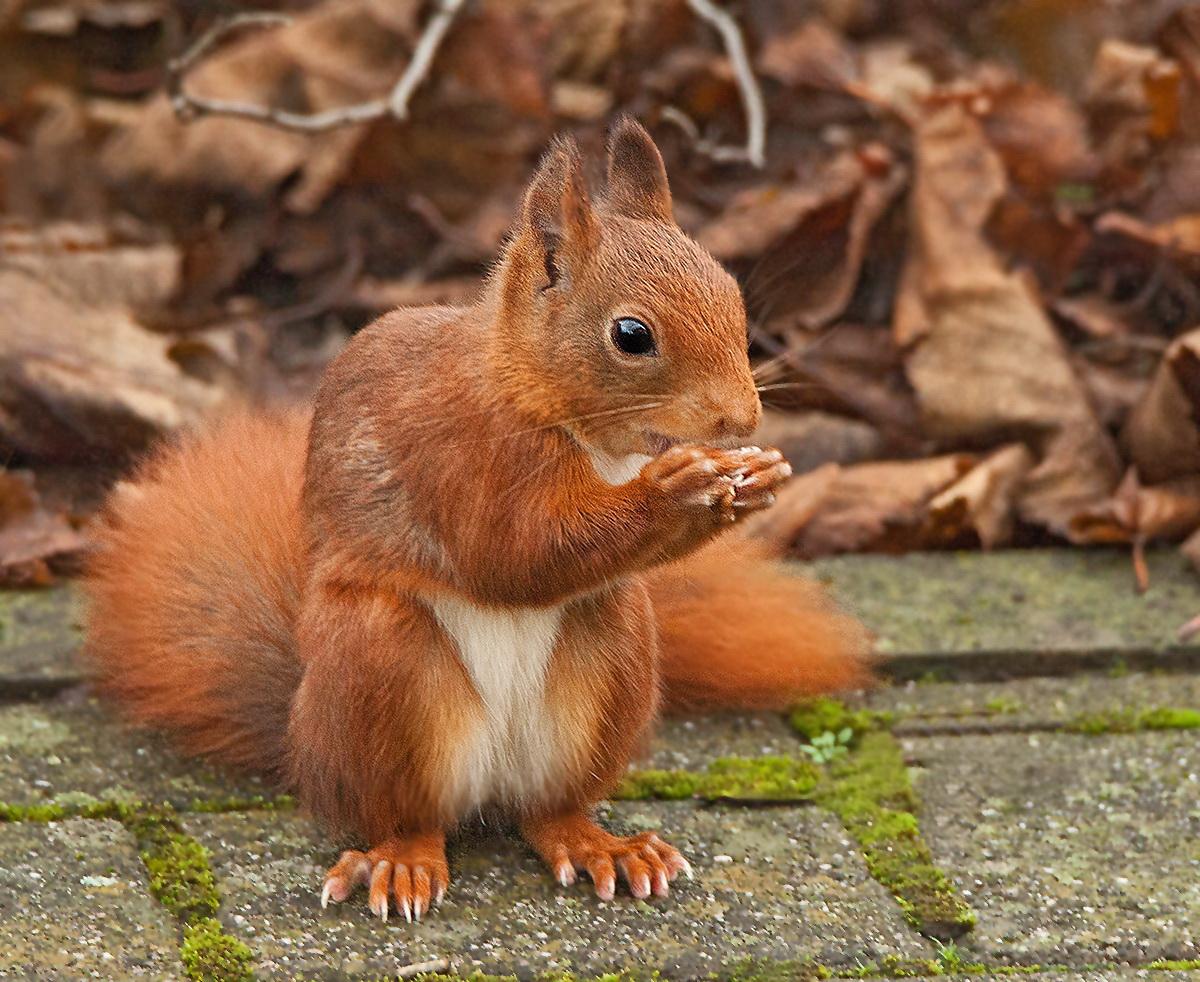 Eichhörnchen(hatte das Falsche eingestellt)
