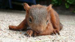 Eichhörnchenkind1