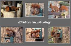 Eichhörnchenshooting