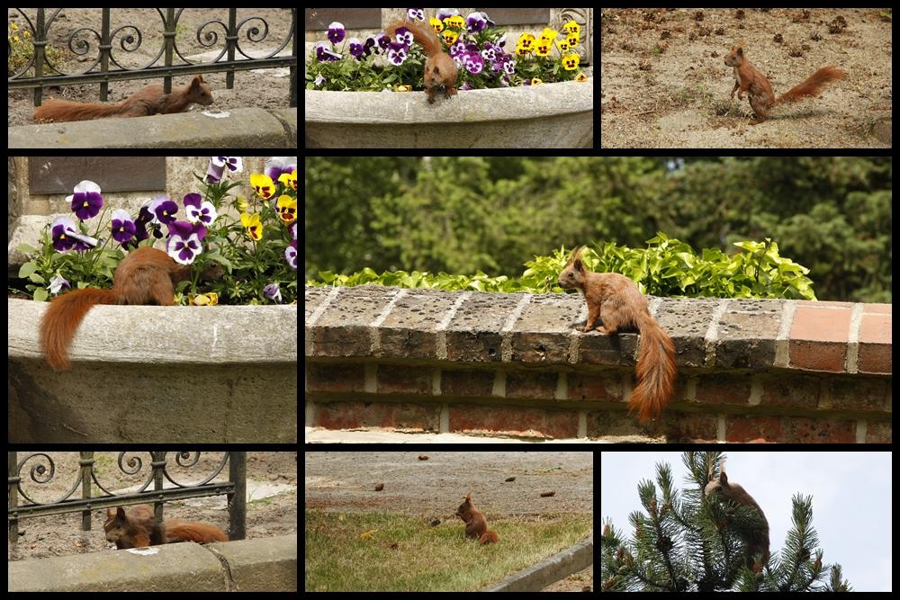 Eichhörnchenspielplatz