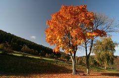 Eifel-Herbst