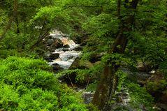 Eifel-Urwald