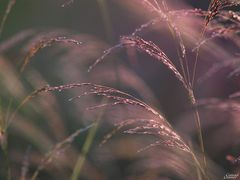 Eifelgrass