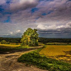 Eifellandschaft -Herbst-