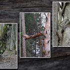 Eigenartige Baumformen. . . .