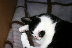 eigentümliche Schlafstellung