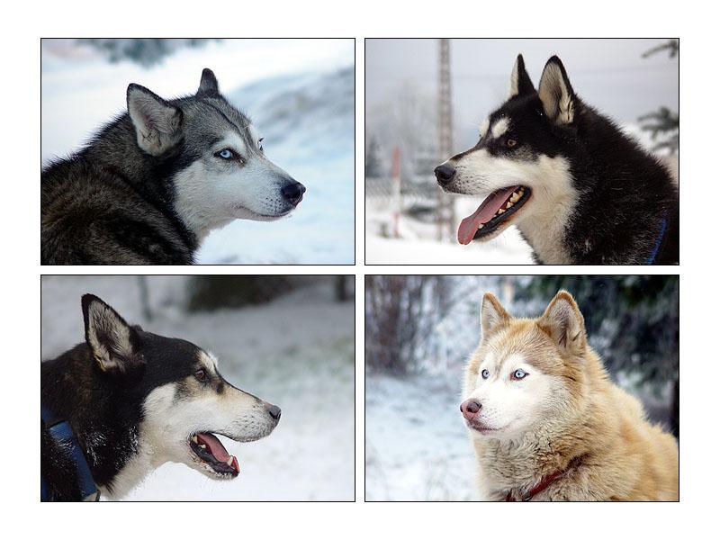Eika, Dusty, Dutsch und Dascha :)