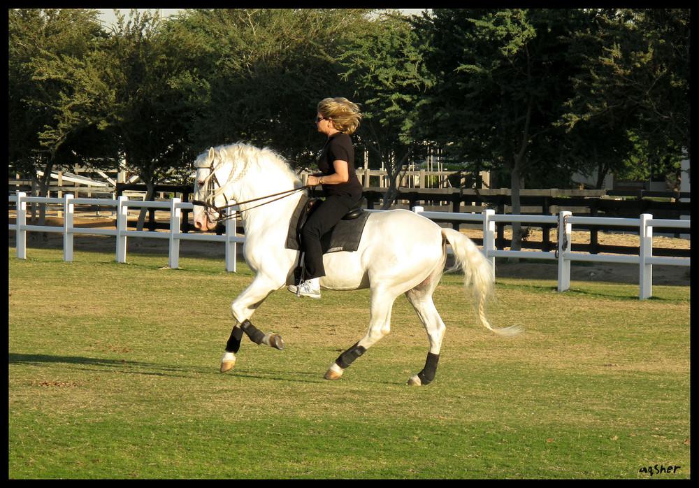 Eileen riding Cannenero (Nero)