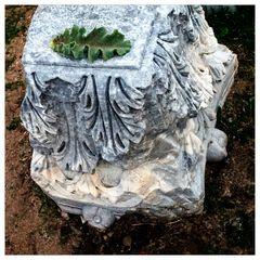 Ein Acanthusblatt