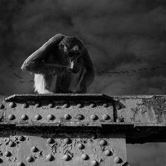 Ein Affe ist entlaufen....
