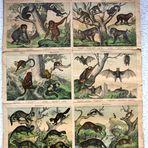 Ein alte Schulwandkarte aus dem Biologieunterricht.
