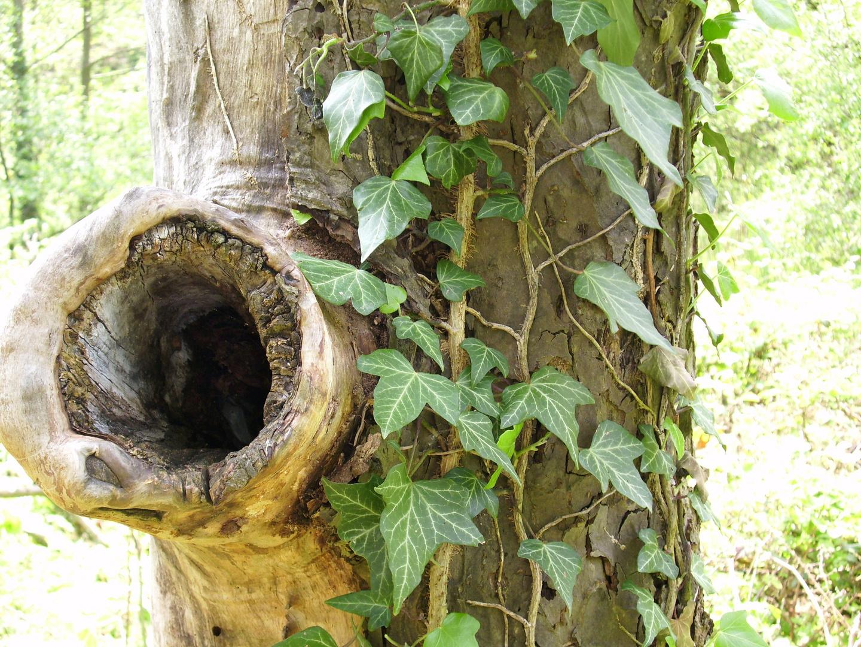 Ein alter Baum erzählt!