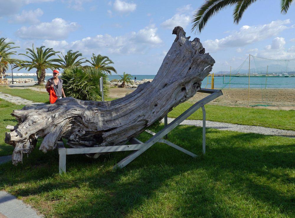 ... ein alter Baum genießt die Zeit !
