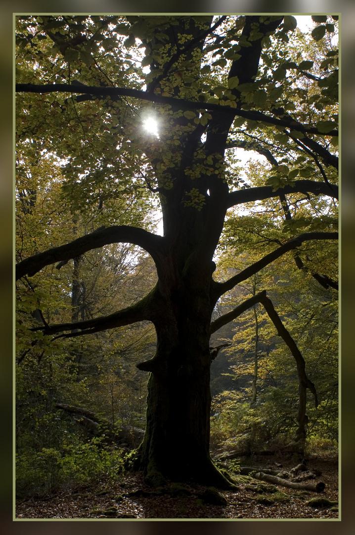 Ein alter Baum im Gegenlicht