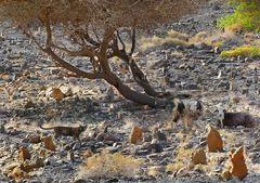 Ein alter Friedhof in Wadi Tiwi