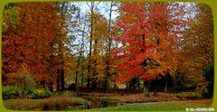Ein Amberbaum hübscht die Herbstfarben