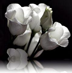 ein anderes Weiß