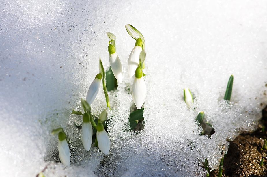 Ein Anflug von Frühling......
