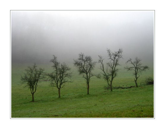 ein anflug von nebel