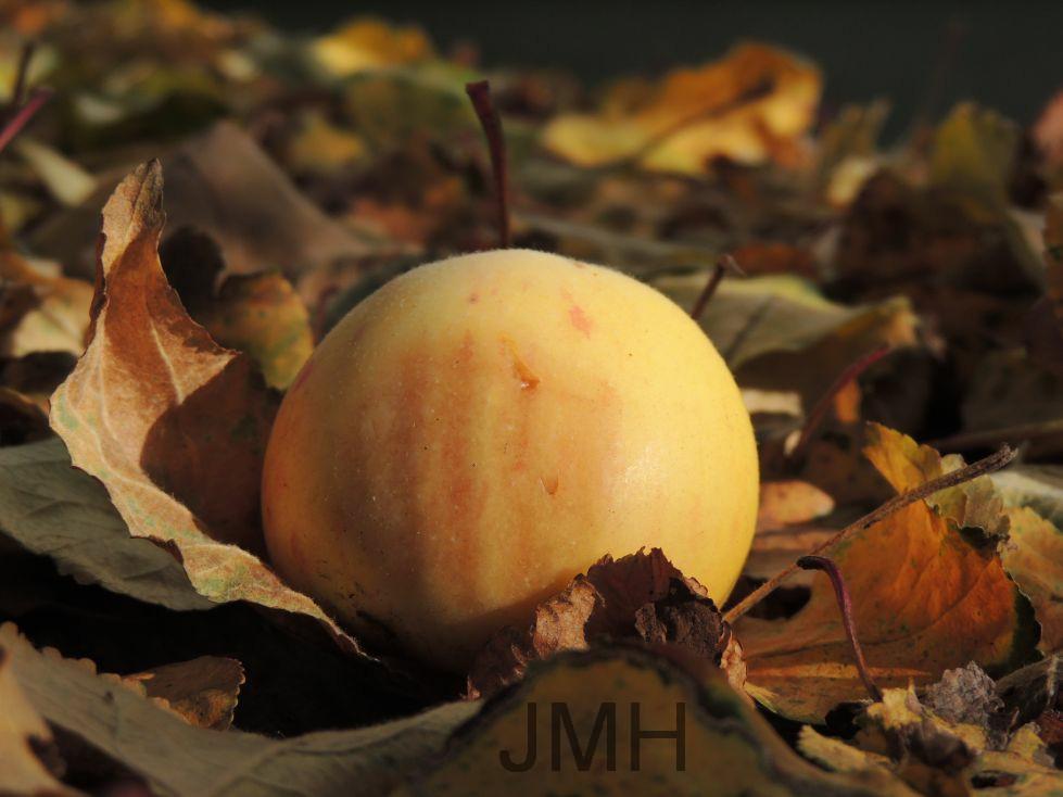 Ein Apfel auf dem Herbstboden
