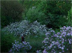 Ein Apfelbaum in Nachbars Garten...