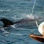 Ein außergewöhnlicher Delfin
