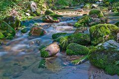 Ein Bach im Schwarzwald