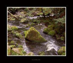 Ein Bach im Wald